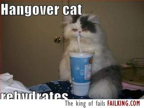 44723-hangover-cat_f