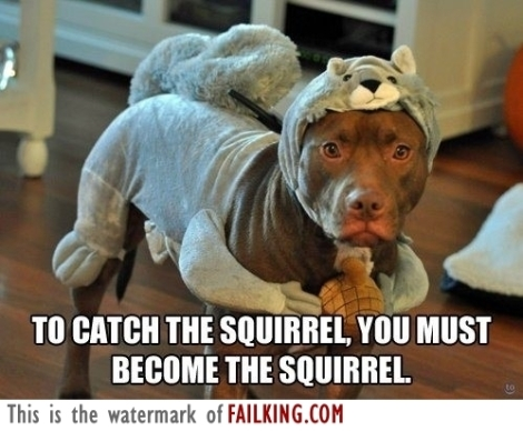 53272-to-catch-the-squirrel_f