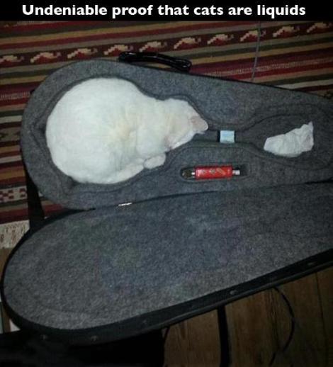 funny-cat-guitar-white-sleeping-1