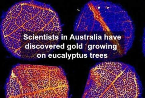 interesting-facts-11