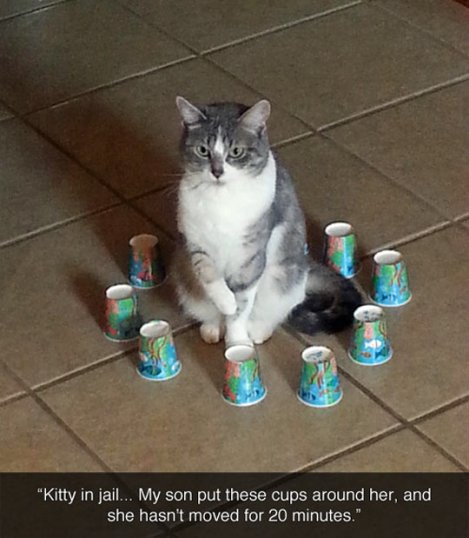 funny_animal_pictures_6